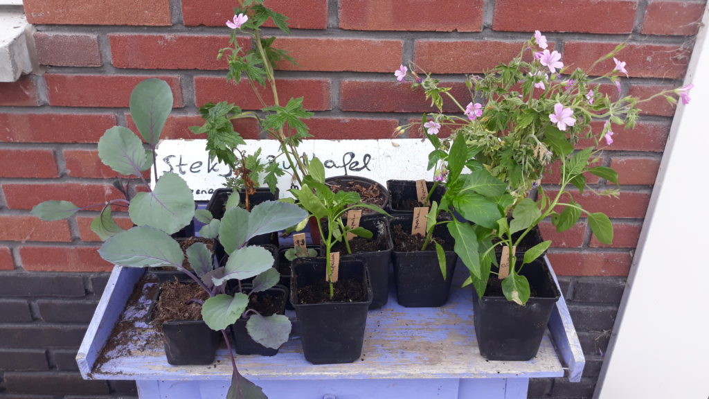 Plantjes op de Stekjesruiltafel